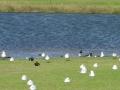 サウスパース(公園)の鳥たち